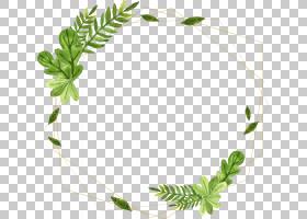植物叶子边框免抠PNG元素