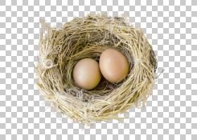 彩蛋卡通,节省开支,鸡蛋,蛋,鸟巢,巢穴,