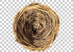 小枝背景,小枝,全球化,电子书,政治,阿塞拜疆人,巢穴,鸟,鸟巢,佐图片