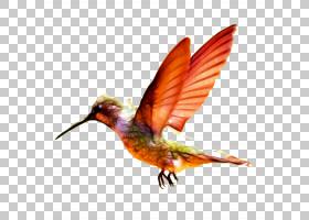 卡通小鸟,机翼,羽毛,喙,珊瑚形目,传粉者,野生动物,价格,批发,车