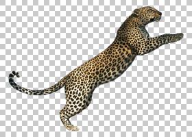 狮子卡通,爬行动物,彪马,野生动物,豹子,咬人,巨人Thinkwell Inc.