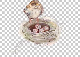 鸟类线画,鸡肉,绘图,线条艺术,蛋,鸟巢,巢穴,吞咽,食用燕窝,鸟,
