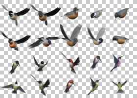 鸟翼,机翼,喙,水鸟,软件,CDR,飞行,鸟,