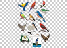 鸟翼,金刚鹦鹉,动画片,羽毛,机翼,CDR,喙,鸟,