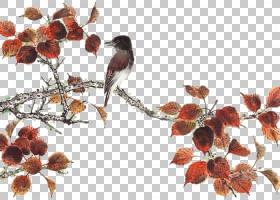 秋叶画,花瓣,叶,树,谢稚柳,陈培秋,绘图,秋叶颜色,水墨画,分支机