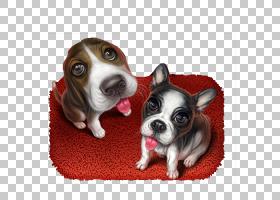 爱的象征,早恋,爪子,狗,鼻部,符号,宠物,犬只繁育,可爱,伴犬,宠物