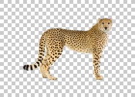 卡通动物,动物形象,图案,鼻部,猕猴桃属,野生动物,跑得最快的动物图片