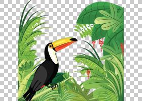 犀鸟,喙,豌豆形目,树,生态系统,植物区系,犀鸟,动画,植被,丛林,热图片