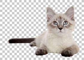 狗和猫,爪哇语,碎布娃娃,亚洲半长毛,爪子,小狗,狗,小猫,暹罗猫,图片