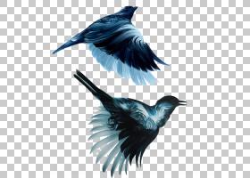 纽约市,乌鸦,机翼,羽毛,喙,乌鸦似鸟,美术学士,水彩画,水墨画,油