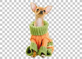 塔可卡通,玩具狗,狗的衣服,狗,猎犬,塔可钟吉娃娃,繁育,伴犬,宠物图片