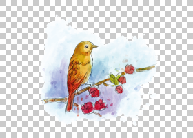 水彩卡通,羽毛,雀类,分支机构,鸟,喙,水彩画,耶稣啊,马克杯,帆布