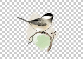 水彩画,小枝,羽毛,喙,斑潜蝇科(Emberizidae),油画,版画制作,打印