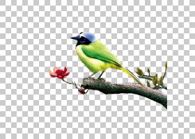 水彩背景,羽毛,雀类,分支机构,鸣鸟,鸟,喙,栖息的鸟,手扇,水墨画,