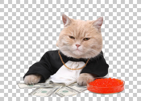 小猫卡通,小猫,猫,黑猫,宠物,猫咬人,Manekineko,钱,