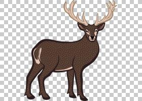 驯鹿卡通,白尾鹿,野生动物,鹿角,线条艺术,喇叭,麋鹿,野牛,白尾鹿图片