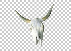 骷髅卡通,山羊,牲畜,草,野生动物,骨架,视频,骨头,喇叭,头骨,牛只