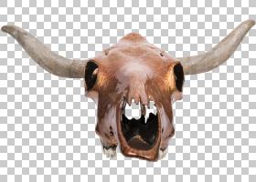骷髅卡通,野生动物,牛只,下颚,动物,公牛,野牛,鹿,公牛,骨头,头骨