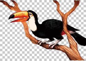 犀鸟,喙,珊瑚形目,不会飞的鸟,犀鸟,3D计算机图形学,绘图,巨嘴鸟,图片