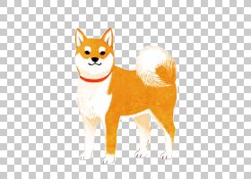 狗和猫,猫,桔黄色的,图案,设计,狐狸,尾巴,红狐,胡须,狗,动物,移