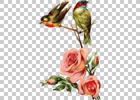 水彩画花卉背景,花卉产业,植物区系,花卉设计,小叶月季,玫瑰家族,