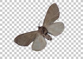 山羊卡通,害虫,家蚕科,机翼,传粉者,飞蛾和蝴蝶,蝴蝶和蛾子,山羊