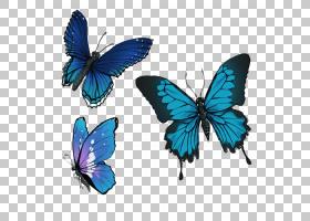 画笔卡通,机翼,狼毒毒素,刷脚蝴蝶,飞蛾和蝴蝶,昆虫,传粉者,油画,
