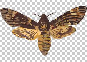 骷髅卡通,刷脚蝴蝶,飞蛾和蝴蝶,传粉者,家蚕科,蝴蝶和蛾子,死亡头