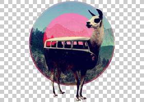 骆驼卡通,骆驼般的哺乳动物,拼贴,画布,当代艺术,打印,海报,水彩