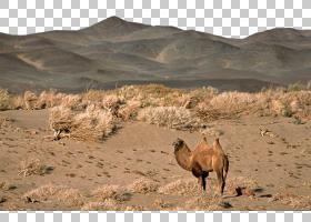 卡通自然背景,瓦迪,景观,生态区,植物群落,草原,撒哈拉沙漠,阿拉
