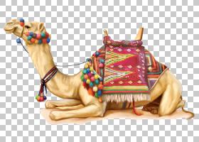 火车卡通,骆驼般的哺乳动物,阿拉伯骆驼,骆驼,骆驼列车,沙漠,骆驼