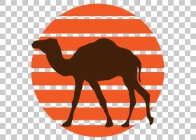 营销背景,红色,线路,阿拉伯骆驼,面积,鼻部,骆驼般的哺乳动物,骆