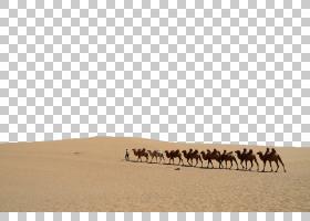 驼峰文本,景观,骆驼般的哺乳动物,文本,ERG,生态区,沙子,骆驼,