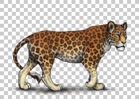 熊卡通,动物形象,彪马,鼻部,野生动物,胡须,剑齿虎,美洲狮,美洲狮