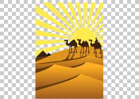 天空背景,景观,线路,撒哈拉沙漠,黄色,天空,骆驼般的哺乳动物,文