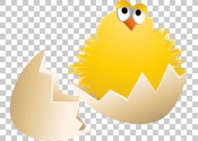 小鸟卡通,鸟,蛋,黄色,喙,贝壳类,CDR,动画,基法朗加,绘图,鸡肉,