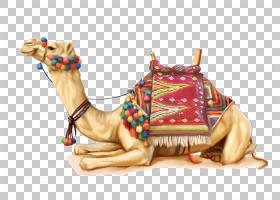双峰驼阿拉伯骆驼,骆驼般的哺乳动物,阿拉伯骆驼,骆驼,沙漠,独角