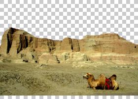 幽灵卡通,岩石,ERG,沙子,骆驼般的哺乳动物,生态系统,荒地,沙漠,