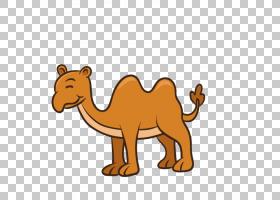 画狮子,图案,阿拉伯骆驼,骆驼般的哺乳动物,牲畜,野生动物,骆驼,