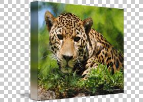 猫卡通,草,野生动物,鼻部,动物,画布,打印,版画制作,胡须,帆布印