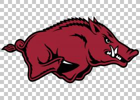 美式足球背景,红色,动画片,嘴,鼻部,猪,头,阿肯色州Razorback,体