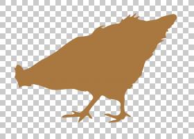 鸟翼,鸟,喙,机翼,尾巴,剪影,动物,架构,abri de Jardin,食物,野生