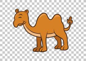 猫卡通,鼻部,彪马,动物形象,阿拉伯骆驼,野生动物,骆驼般的哺乳动