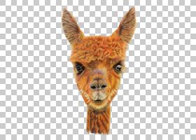 骆驼卡通,毛发,骆驼般的哺乳动物,野生动物,鼻部,桔黄色的,绘图,