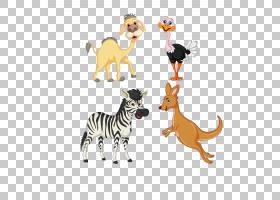 考拉卡通,动物形象,尾巴,野生动物,宠物,动物,驴子,考拉,袋鼠,骆