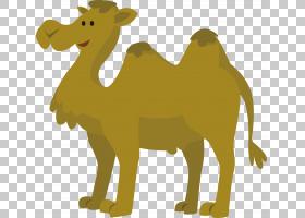 黄色背景,阿拉伯骆驼,鼻部,黄色,骆驼般的哺乳动物,牲畜,野生动物