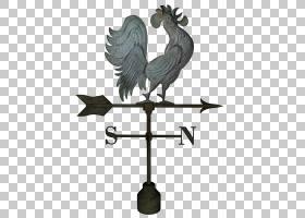 名片背景,鸟,机翼,鸡肉,喙,公鸡,牲畜,家禽,指南针,业务,名片,办