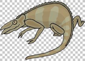 灰色背景,动物形象,尾巴,青蛙,灰色,颜色,绘图,动画片,爬行动物,