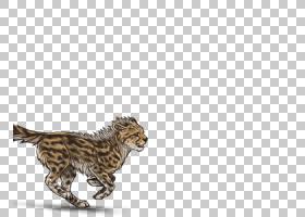 卡通猫,动物形象,尾巴,野生动物,动物,猫,猎豹,