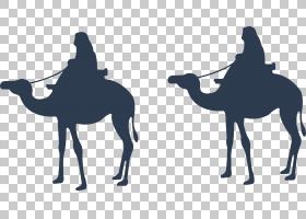 开斋节剪影,阿拉伯骆驼,骆驼般的哺乳动物,牲畜,马,骆驼,宰牲节阿